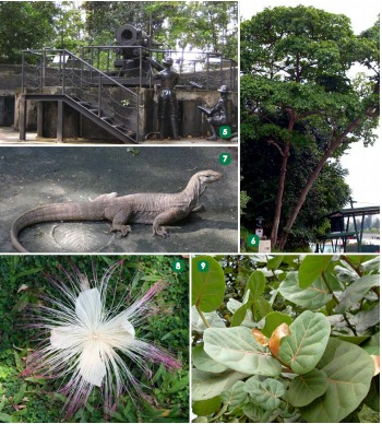 (5) firing cannon (6) Sea Almond (7) lizards (8) Fish Poison Tree (9) Sea Grape Tree